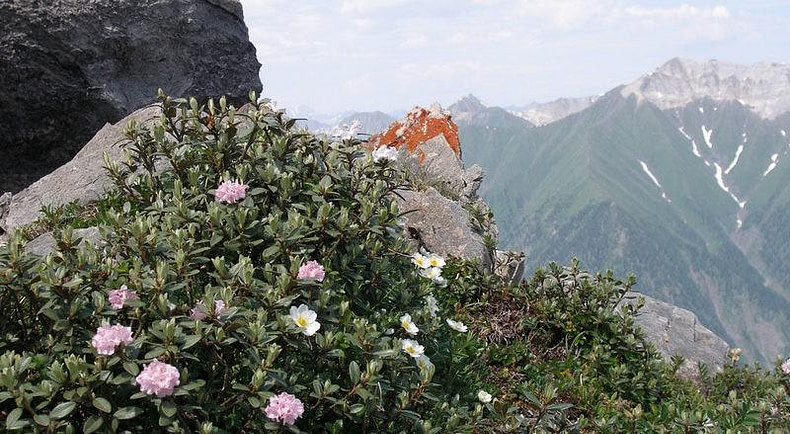 Саган Дайля цветёт в горах