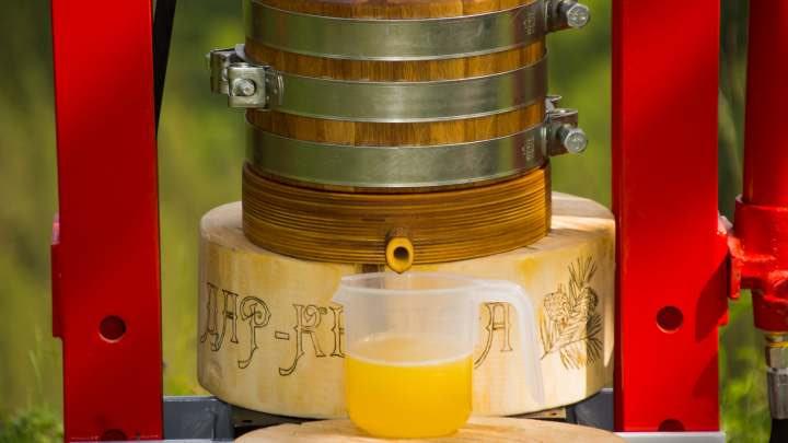 кедровое масло без нагрева ручной отжим